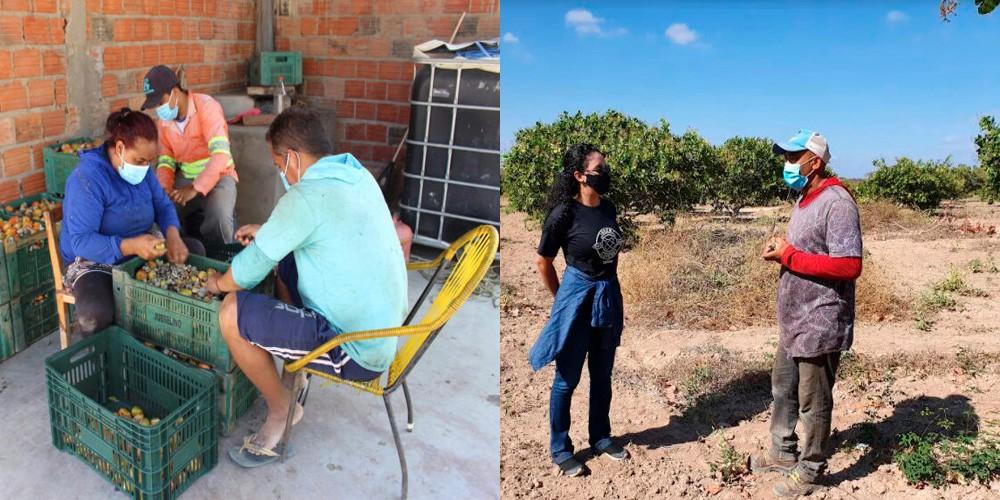 Ambev inicia compra de cajus para produção de cerveja no Piauí